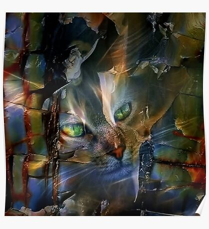 Cat Glancing Poster