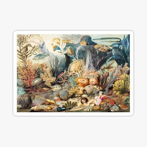 Ocean Life by James M. Sommerville 1859 Sticker