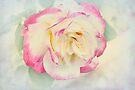 Pastel Rose by Elaine Teague