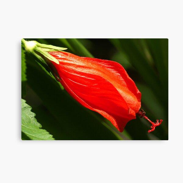 Unknown Brazilian Flower Canvas Print