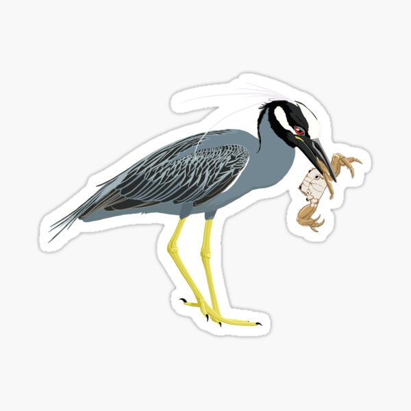 Yellow-Crowned Night-Heron Sticker