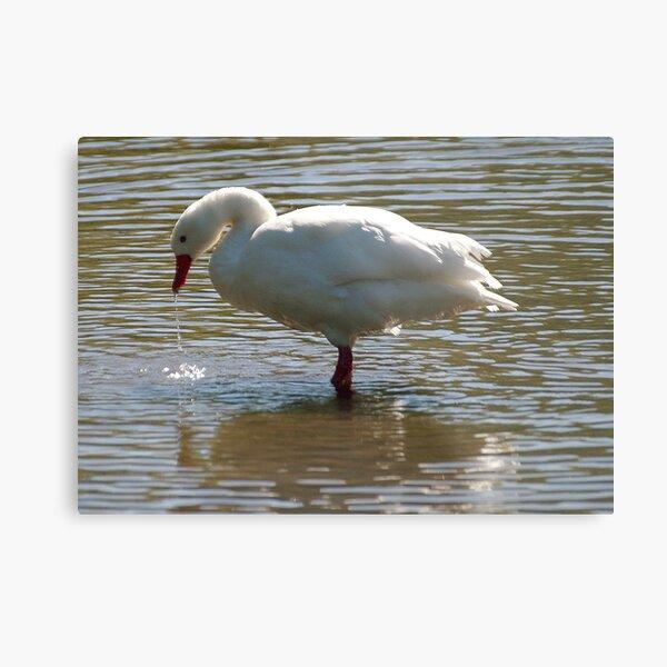 White Goose Metal Print