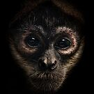 Spider Monkey by Natalie Manuel