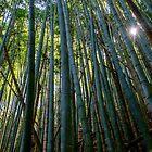 « Forêt de bambous au Japon » par Jonathan B. Roy