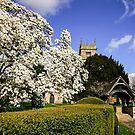 Magnificent Magnolia  by ScenicViewPics
