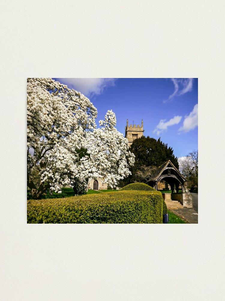 Alternate view of Magnificent Magnolia  Photographic Print