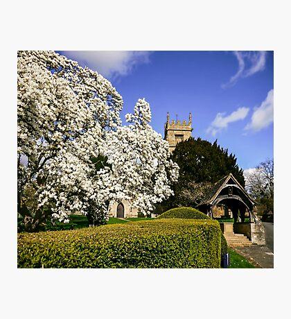 Magnificent Magnolia  Photographic Print
