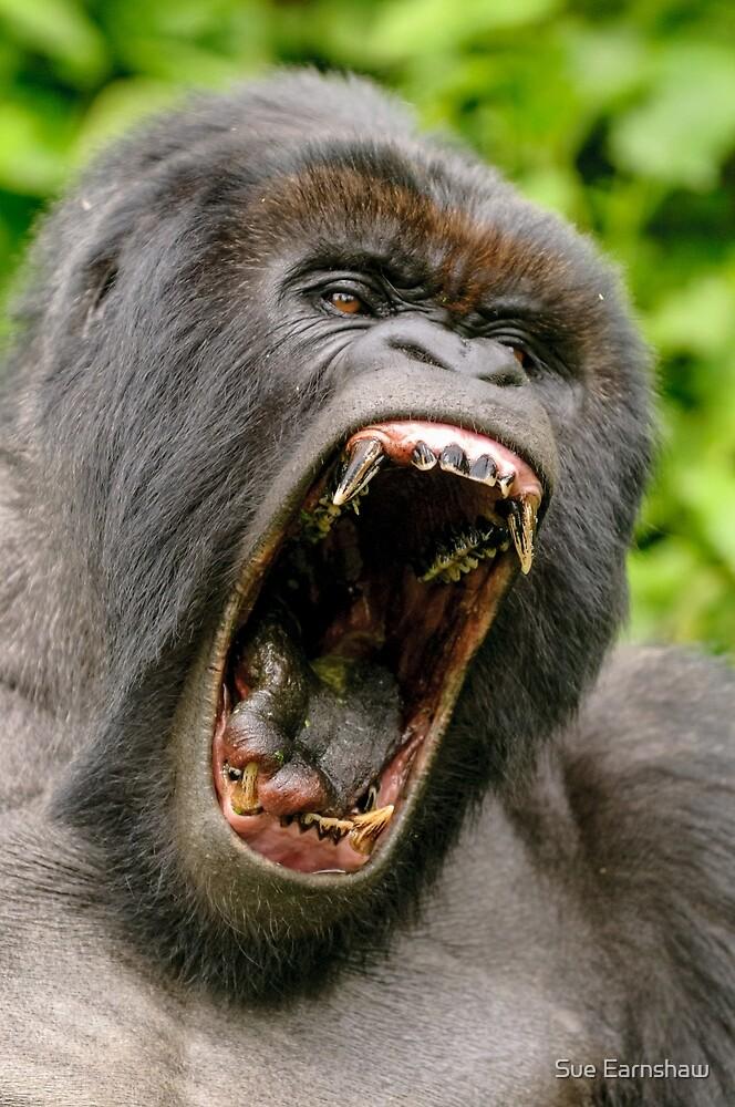 Quot Silverback Gorilla Virunga National Park Rwanda Quot By Sue