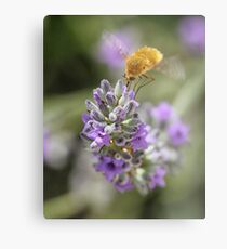 Insect studying flower Metal Print