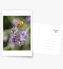 Insect studying flower Postcards