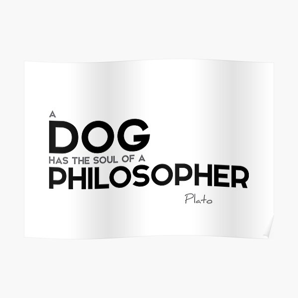 dog: soul of a philosopher - plato Poster