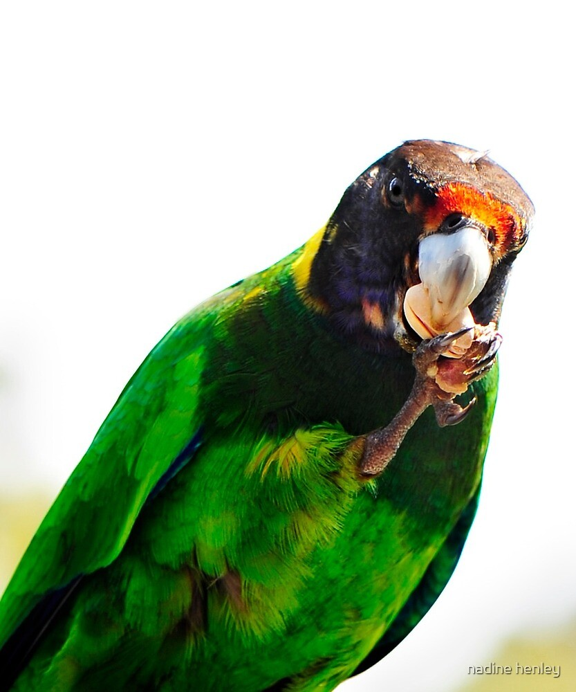 28 parrot by nadine henley