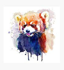 Rotes Panda-Porträt Fotodruck