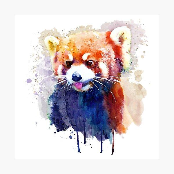 Red Panda Portrait Photographic Print