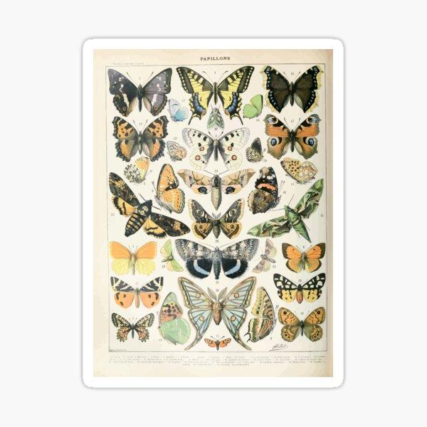 Adolphe Millot papillons A Sticker