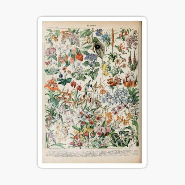 Adolphe Millot fleurs D Sticker
