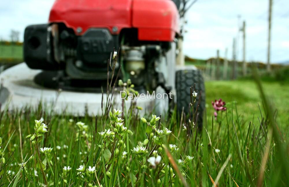 Lawnmower Vs. Grass! by DaveMont