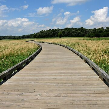The Path by wonderkay