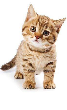 Cute Cat by AnUnseenGod