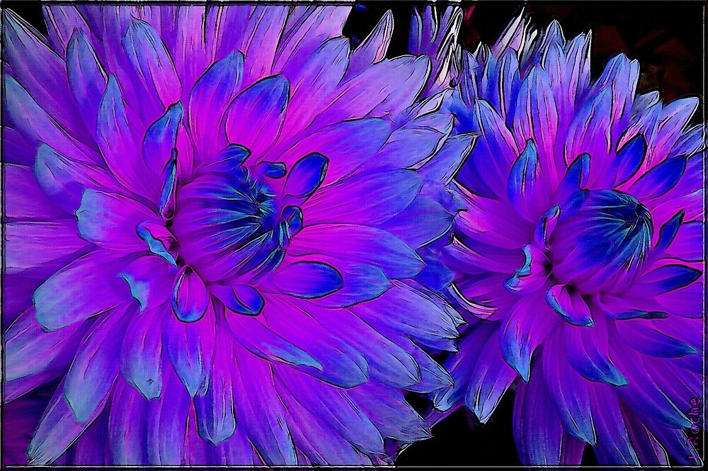 blue / pink dahlias - pink and blue dahlias by LEAROCHE