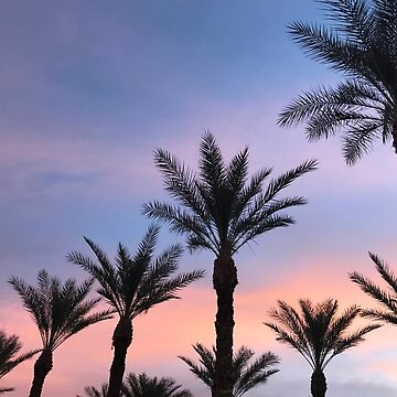 Sunset Palm Trees by Cyearuh