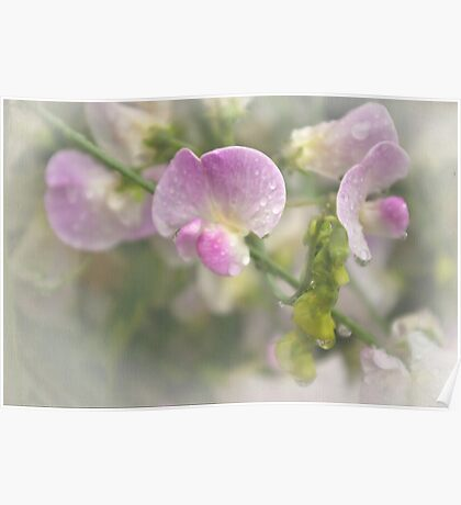 Refreshing beauty of soft pink flowers in dew Poster
