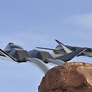 Pima Raptors by Bob Moore