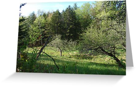 Apple Orchard by May Lattanzio