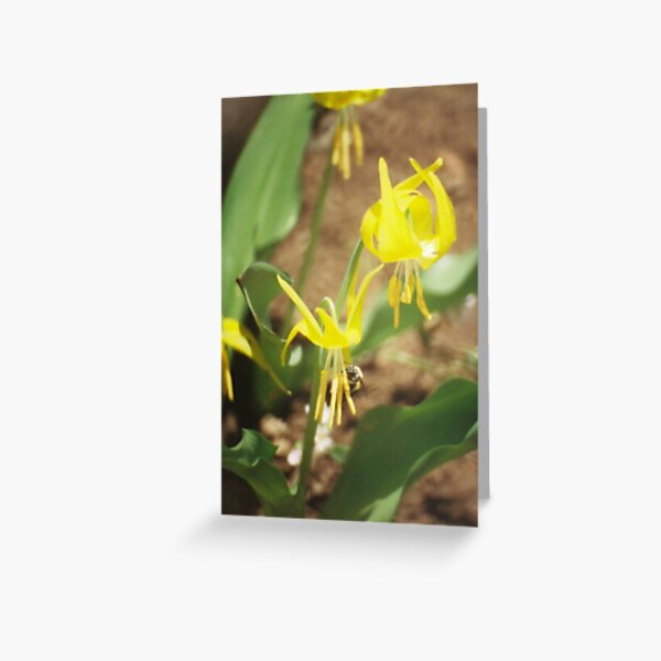 Wildflowers: Glacier Lily and BumbleBee Greeting Card
