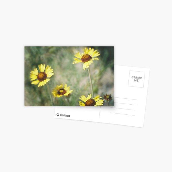 Wildflowers: Wild Sunflower Postcard