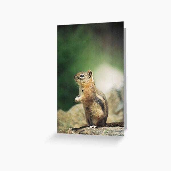 Wildlife: Chipmunk on Trail Greeting Card