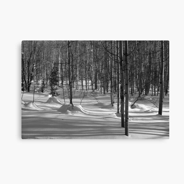 Wilderness: Aspen Grove Black and White Canvas Print