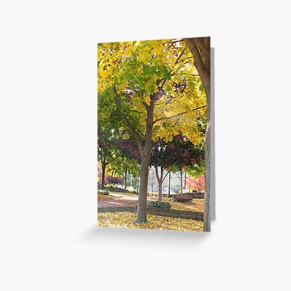 Fall Colors: Lake George, NY Greeting Card