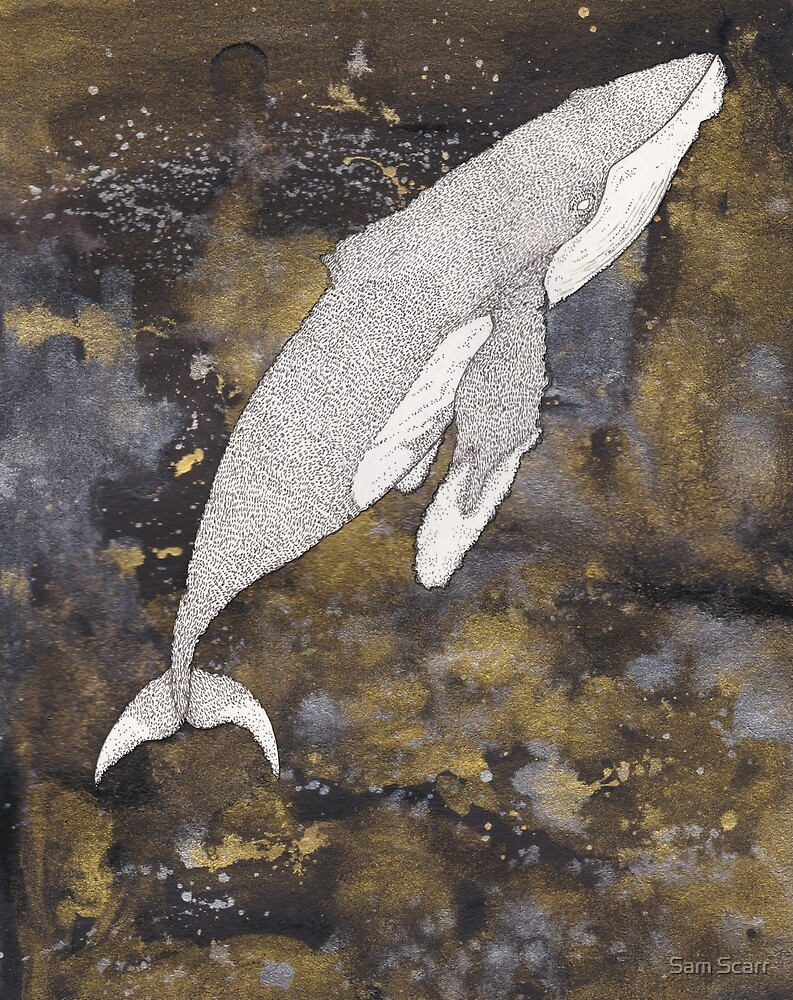 whale by samclaire