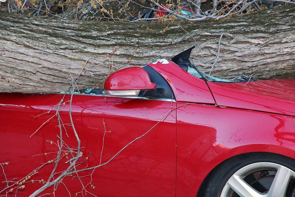 When A Tree Falls – 2 by Cora Wandel