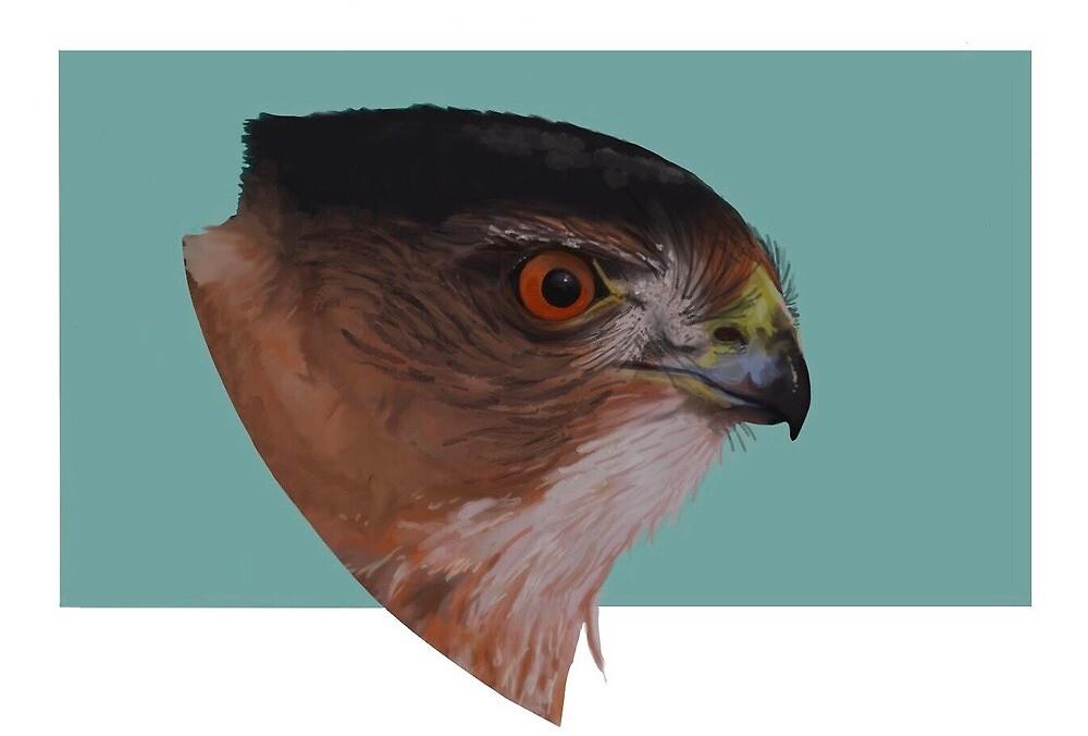 Hawk by ivoxus