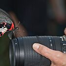 A Nikon Lover by Kasey Cline