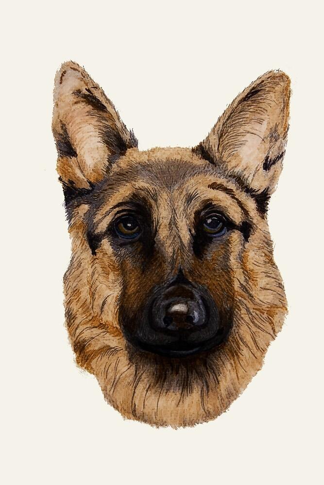 German shepherd by John Stuart Webbstock