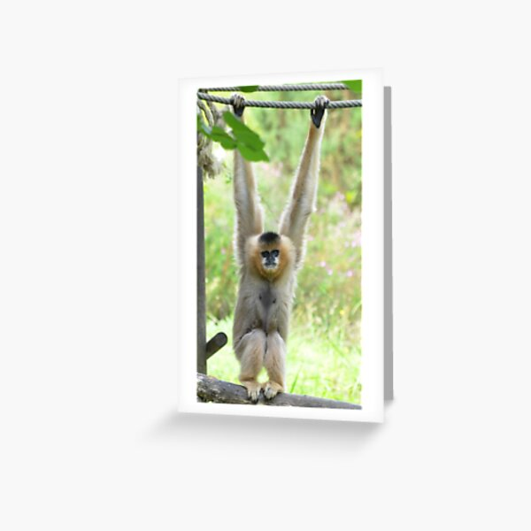Gibbon playfully swinging on a rope Greeting Card