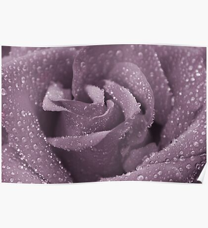 Dusty Purple Rose Poster