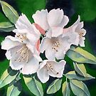 White Rhodies by bevmorgan