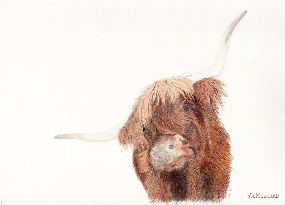 highland cow by Vickicatlow