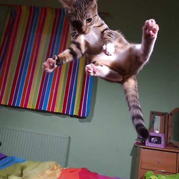 Kung-fu kitty by turniptowers