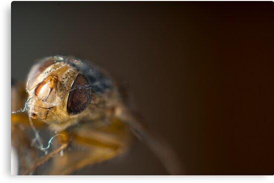 A Dead Housefly is Dead Housefly.. Even in Macro by Tony Lin