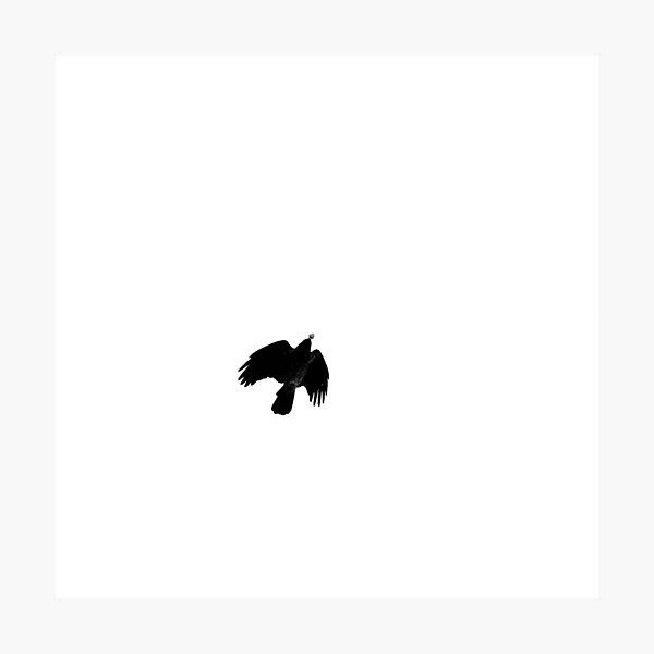 Bird silhouette Photographic Print