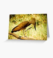 Hamerkop, Malawi Greeting Card