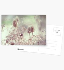 Icy Morning. Wild Grass  Postcards