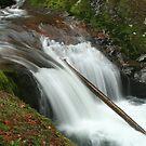 Sweet Creek Falls 2 by CarrieAnn