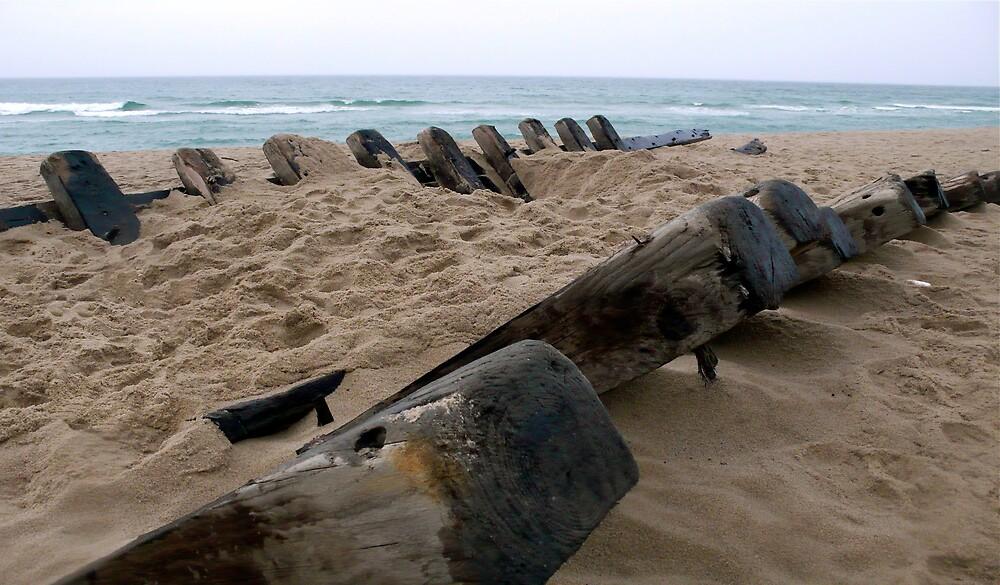 Welllfleet, Cape Cod Shipwreck by Christopher Seufert