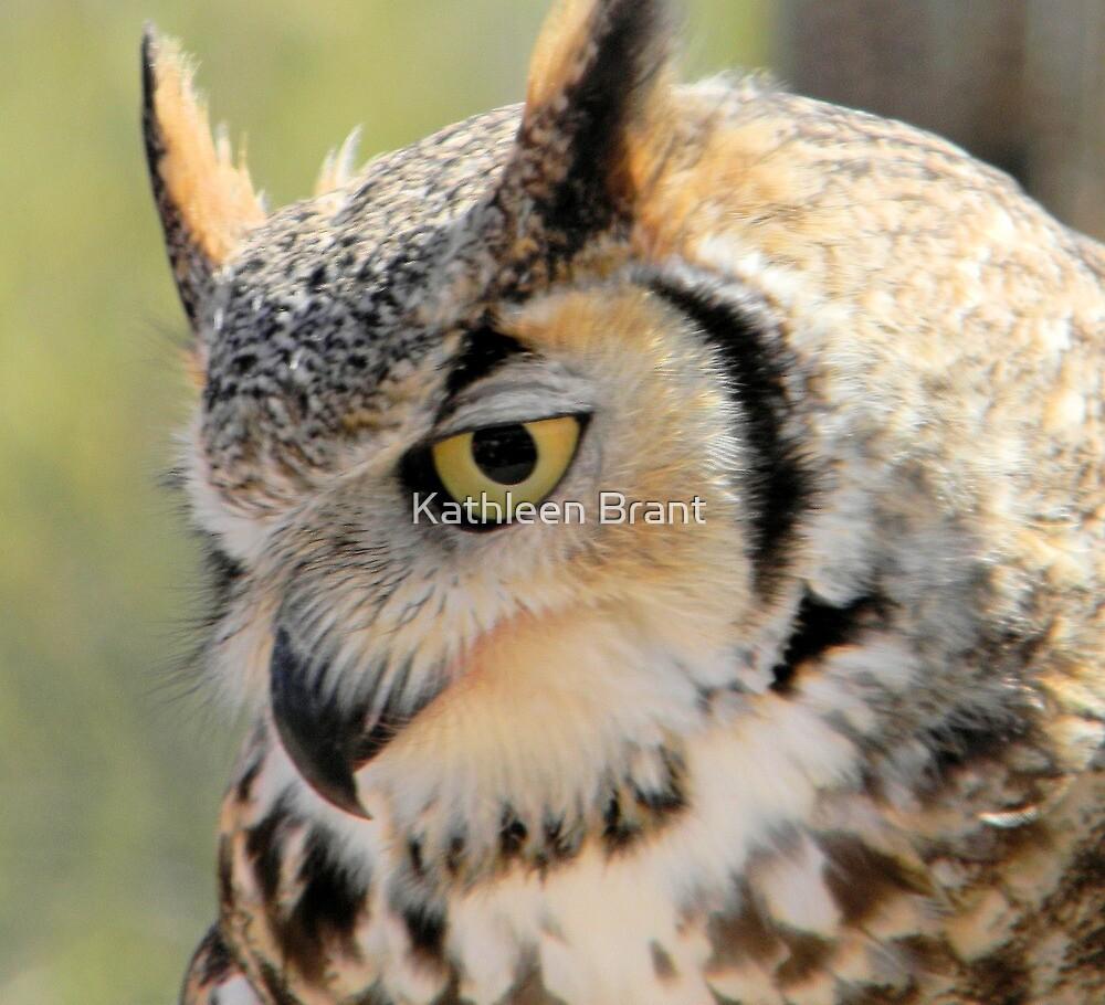 Great Horned Owl by Kathleen Brant